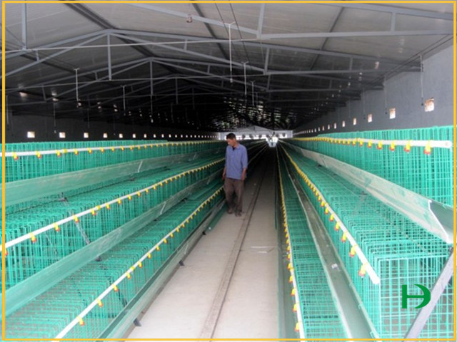 layer cages for poultry farm