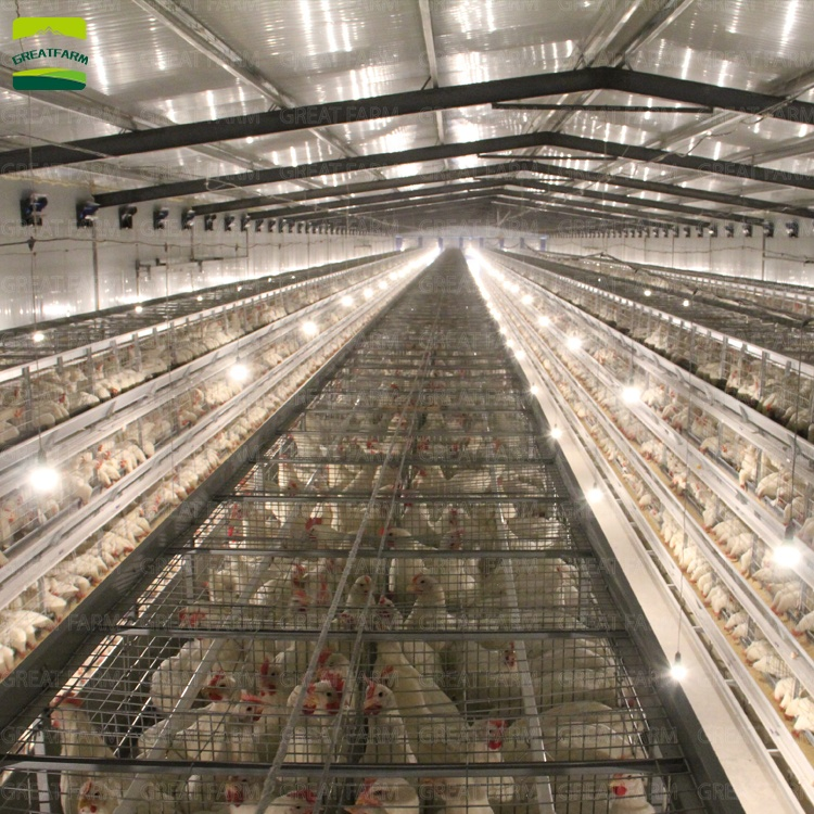 h-type--battery-automatic-chicken-cage