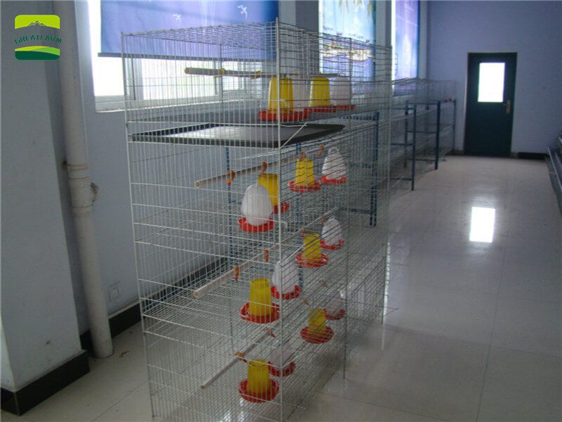 Vertical baby chicken cages