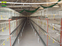 Vertical broiler cages
