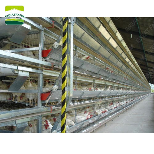 chicken farm automatic egg collection system